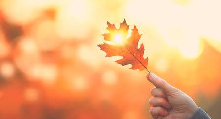 秋から始める脱毛♪
